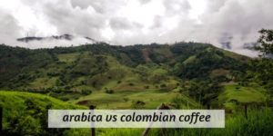 Arabica VS Colombian Coffee – What's The Difference ?