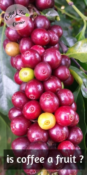 coffee fruit (1)