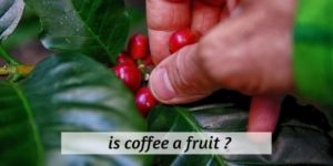 Read more about the article Is Coffee A Fruit ? The Surprising Truth About Your Morning Cup
