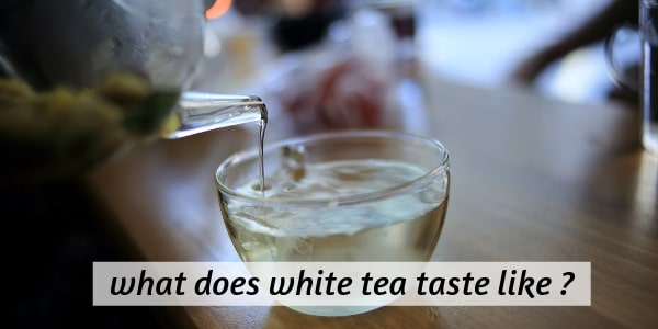 Here's What Delicate White Tea Tastes Like (And How To Make A Cup)