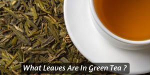 What Leaves Are In Green Tea ? (What Your Fave Tea Is Made Of)
