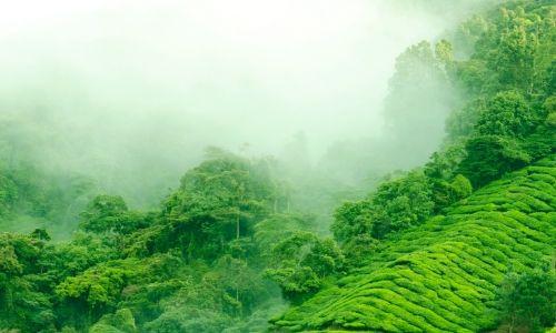 oolong tea terrace