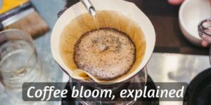 Coffee Bloom – What It Is, And Why It Matters