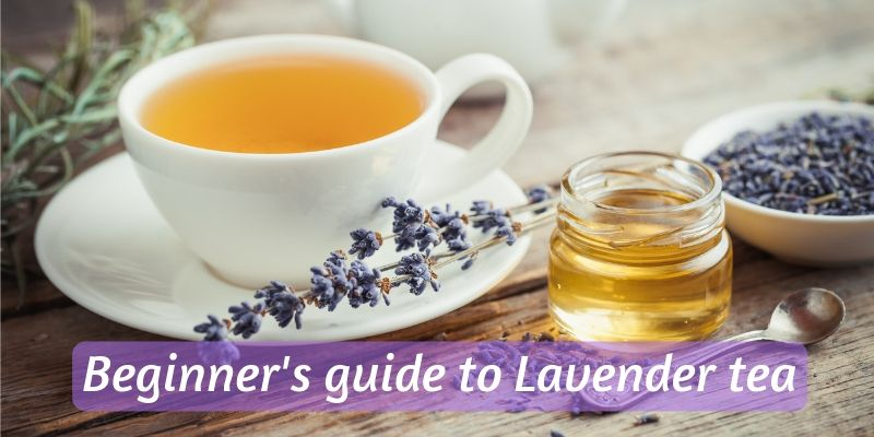 Beginner's Guide To Lavender Tea – Brewing, Origins, And Benefits