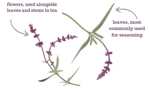 sage leaf flower