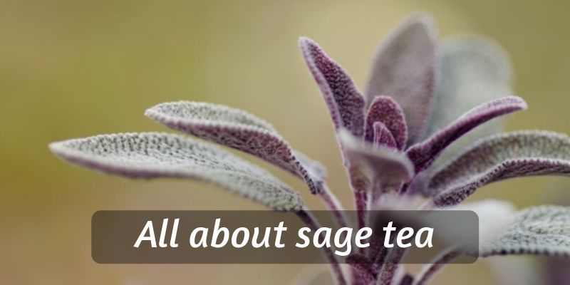 Beginner's Guide To Sage Tea – Brewing, Flavor, Benefits