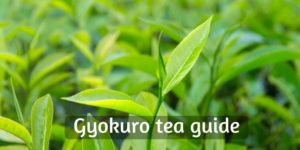 What Is Gyokuro Tea ? 8 Things To Know About The Japanese Jade Dew