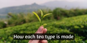 How Is Tea Made – Each Tea Type, Discussed And Explained