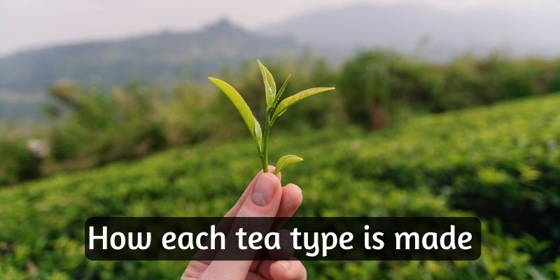 how is tea made