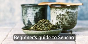 What Is Sencha ? A Beginner's Guide Japan's Popular Green Tea