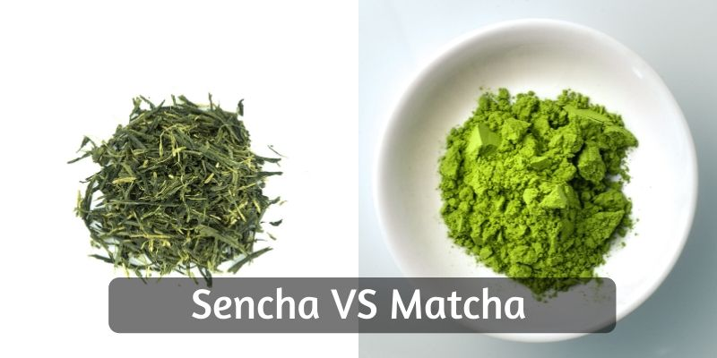 Sencha VS Matcha – 7 Differences To Tell Them Apart