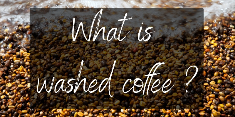 Washed Coffee – What Is It, And Is It Better ?
